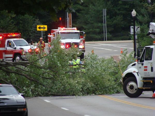Car-killing Tree